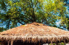 thatched tak Royaltyfri Fotografi