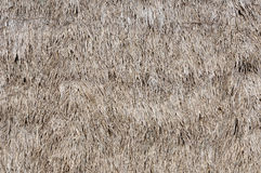 Thatched Texture Stock Images