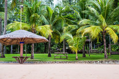 Thatched umbrellas on Beach. Thatched umbrellas on Beach,coconut tree plantation Royalty Free Stock Image