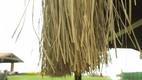 Thatched umbrellas on beach. HD stock footage