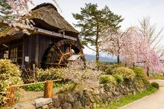 Thatched wooden house with pink Cherry blossom. Or sakura at Saiko Iyashi no Sato Nenba, former farming, village near Mt. Fuji, Japan. Copy space for text stock image