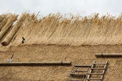 Thatched Roof with Straw or reed and tools. Thatcher thatching a roof of a house with new straw.Thatched roof of a home Royalty Free Stock Image