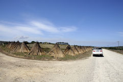 Thatching grass drying on the roadside South Africa Stock Images