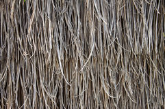Thatching grass Royalty Free Stock Images