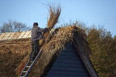 Thatching - Thatched Roof - England. Thatching a roof in a village in Norfolk in southeast England. Thatching is the craft of building a roof with dry vegetation Royalty Free Stock Photography