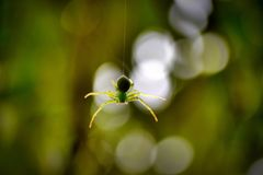 thats green Spider stock photo