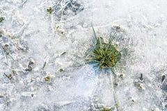 thaw Στοκ Εικόνες