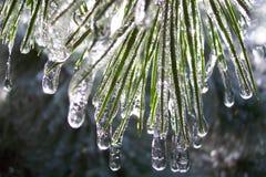 thaw Στοκ Φωτογραφίες
