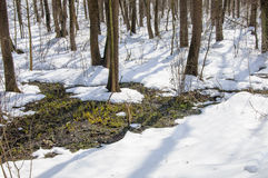 Thaw in the spring forest Stock Image