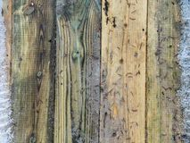 Thaw on the wooden floor terrace. Old vintage wooden surface textured with Christmas needles royalty free stock images
