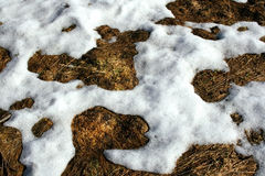 Thawed patch Stock Image