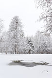 Thawed patch in the snow. Winter landscapes Royalty Free Stock Images