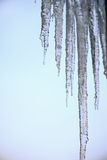 Thawing icicles Royalty Free Stock Photo