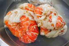 Thawing lobster tails at mac's pizzeria on bequia. Frozen, poached caribbean langouste to be used on pizzas at a restaurant in the caribbean Royalty Free Stock Photo