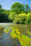 Thaya реки в Австрии Стоковое фото RF