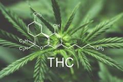 THC chemical formula Macro of a cannabis flower and marijuana macro stock photos