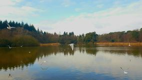 The Stover Country Park lake  is an area of woodland park in the parish of Teigngrace, Devon