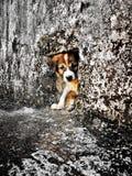 Theâ€-‹Hund lizenzfreies stockfoto