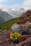 The Alpine Flowers In Stones Stock Photo