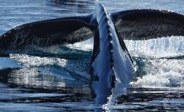 Free The Amazing Animals Of Antarctica Stock Photos - 144368383