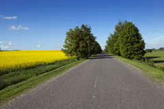 The Asphalted Road Royalty Free Stock Image