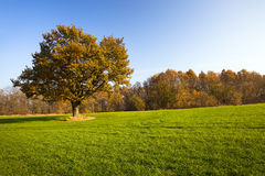 The Autumn Nature Royalty Free Stock Image