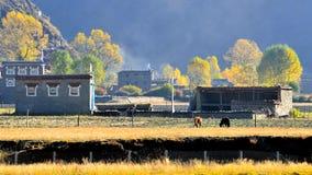 Free The Autumn Of Xinduqiao Stock Photo - 46157690