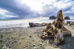 Free The Awesome Landscape Of La Push Beach - FORKS - WASHINGTON Royalty Free Stock Photo - 93510725