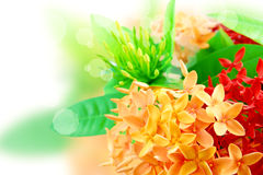 The Beauty Of Flowers Royalty Free Stock Images