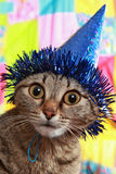The Become Stupid Cat Royalty Free Stock Image