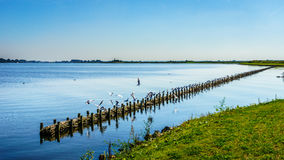 Free The Bird Sanctuary Of Veluwemeer With Reed Along The Shore Stock Photo - 79472750
