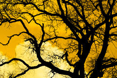 The Black Silhouette Of Tree Against Sunset Sky Royalty Free Stock Photography