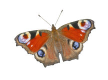 Free The Butterfly Stock Images - 20976874