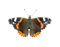 Free The Butterfly Stock Images - 2981564