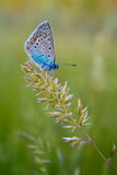 The Butterfly On A Branch Royalty Free Stock Images