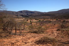 The Caatinga Landscape In Brazil Royalty Free Stock Photos