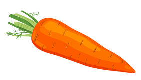 Free The Carrot. Royalty Free Stock Image - 19190066