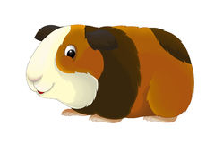 The Cartoon - Guinea Pig - Illustration For The Children Royalty Free Stock Photography