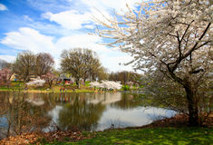 Free The Cherry Blossom Festival In New Jersey Stock Photo - 9174000