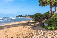 Free The Coast Along Lihue, Kauai, Hawaii Royalty Free Stock Image - 81996396