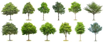 Free The Collection Of Trees Isolated On White Background. Beautiful And Robust Trees Are Growing In The Forest, Garden Or Park Royalty Free Stock Images - 145578159