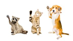 Free The Company Of Playful Funny Animals Stock Photo - 121114470