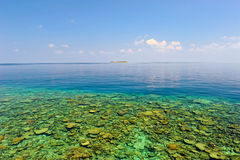 The Coral Reef Of Maldives Royalty Free Stock Photography