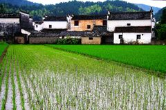 The Countryside Scenery Of Wuyuan Ancient Village Royalty Free Stock Photo