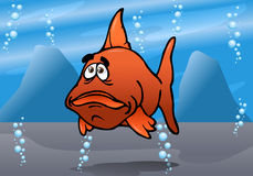 Free The Cute Fish Red Bash Royalty Free Stock Photos - 26352918
