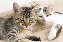 Free The Cute Kitten Cat Stock Photos - 120132243