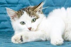 Free The Cute Kitten Cat Stock Image - 120132471