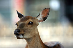 Free The Deer Stock Photography - 755642