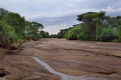 Free The Dried-up African River Stock Photos - 48237333