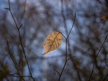 Free The Dry Autumn Leaf In A Forest Royalty Free Stock Image - 112924526